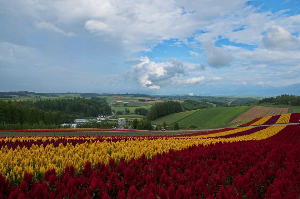 ทุ่งดอกไม้หลากสี ภาพโดยนางสาวสุนันท์ กิขุนทด